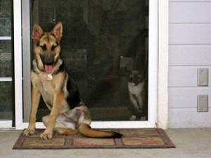 Daisy Rae and kitty amigo